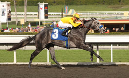 Conveyance Wins The San Rafael Stakes Royalty Free Stock Images