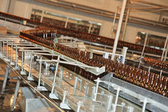 Conveyer line with many beer bottles Royalty Free Stock Image