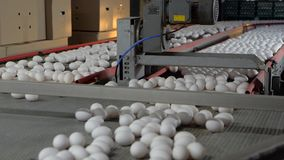 Conveyor belt for chicken eggs. Slow motion. Conveyor belt for chicken eggs the eggs go through different sections of the ribbon. Slow motion stock video footage