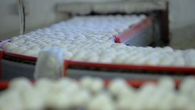 Conveyor belt for chicken eggs. Slow motion. Conveyor belt for chicken eggs chicken farm. Slow motion stock footage