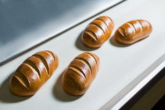 Conveyor with bread. Royalty Free Stock Photo