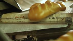 Conveyor with bread. Production of bread. Plant for the production of breads. Bread from the oven. Baking bread. Breads on the conveyor. Confectionery. Bakes stock footage