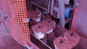 Conveyor line in a modern greenhouse, greenhouse with an automated conveyor, flowers in pots on a conveyor stock video footage