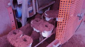 Conveyor line in a modern greenhouse, greenhouse with an automated conveyor, flowers in pots on a conveyor stock video