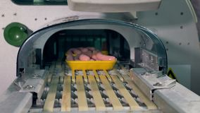 Yellow trays with sausages places on a conveyor line. stock footage