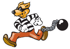 Convict dog. Criminal dog making his escape with ball & chain still attached Royalty Free Stock Images