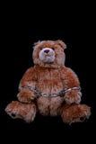 Convict simile a pelliccia fotografie stock libere da diritti