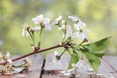 Conviene fragancia de la cereza imagen de archivo libre de regalías