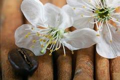 Conviene il profumo di fragranza della ciliegia Fotografie Stock Libere da Diritti