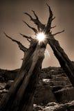 Convite del árbol Foto de archivo