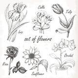 Convite elegante do casamento do vintage com flores do verão Ilustração preto e branco ilustração stock