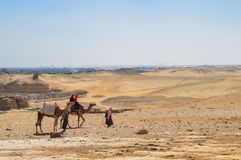 Convoglio del cammello al deserto di Giza fotografie stock libere da diritti