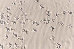 Convoluted bird footprint traces Royalty Free Stock Photo
