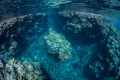 Convoluted Coral Reef Royalty Free Stock Photos