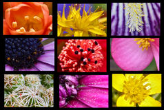 convolvulus σύνθεσης ανασκόπησης λευκό τουλιπών λουλουδιών Στοκ Φωτογραφία