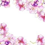 convolvulus σύνθεσης ανασκόπησης λευκό τουλιπών λουλουδιών Στοκ Φωτογραφίες
