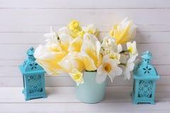 convolvulus σύνθεσης ανασκόπησης λευκό τουλιπών λουλουδιών Στοκ εικόνα με δικαίωμα ελεύθερης χρήσης