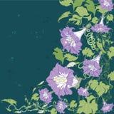 Convolvulus flowers card Royalty Free Stock Photo