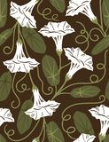 Convolvulus flowers - seamless pattern. Floral seamless pattern with styled flowers Royalty Free Stock Photos