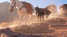 Convoy Of Mules With audio. Establish shot clip stock footage