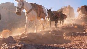 Convoy Of Mules at Grand Canyon. Establish shot clip stock footage