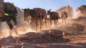 Convoy Of Mules In Slow Motion. Establish shot clip stock video