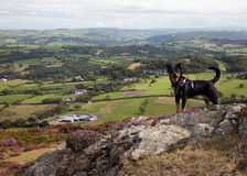 Conwy Valley and a dog Stock Photo