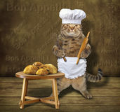 Cook cat 3 Royalty Free Stock Images
