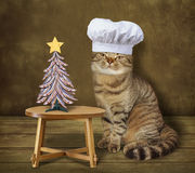 Cook cat Royalty Free Stock Image