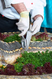The cook cuts the sturgeon. The cook cuts the Czarist fish Stock Photos