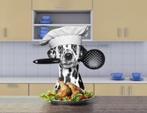 Free Cook Dalmatian Dog Holding A Spoon Stock Photo - 107436810
