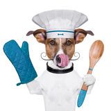 Dog cook chef. A cook dog holding an cooking spoon and licking Royalty Free Stock Photo