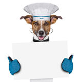 Dog cook chef banner. A cook dog holding an empty placard Stock Images