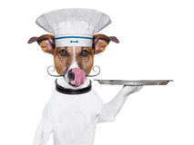 Dog cook chef. Cook dog holding a serving tray with cover Royalty Free Stock Photography