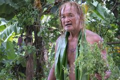 Cook Islander explains about the local nature on Eco tourism tour in Rarotonga Cook Island. Cook Islander explains about the local nature during an eco tourism stock photography