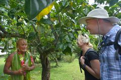 Cook Islander taking tourist couple on Eco tourism tour in Rarotonga Cook Islands. Cook Islander Pa explains a couple of western tourists about the local nature stock photo