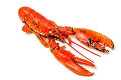 Cook lobster Royalty Free Stock Photo