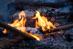 Cook out fire Royalty Free Stock Photos