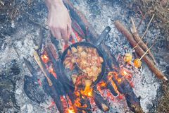 Cook prepares porcini mushrooms with tomatoes in a pan on a fire in the spring forest stock image