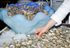Cook preparing oysters Royalty Free Stock Images