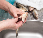 The cook pulls the guts out of the fish Royalty Free Stock Photo