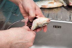 The cook pulls the guts out of the fish Royalty Free Stock Images