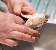 The cook pulls the guts out of the fish Stock Photography