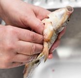 The cook pulls the guts out of the fish Stock Photo