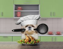 Cook shitzu dog holding a spoon. And going to eat Royalty Free Stock Photos