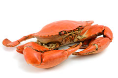 Cooked Blue Crab Royalty Free Stock Photography