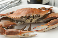 Cooked blue crab. On a plate Stock Image