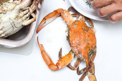 Cooked blue crabs Stock Photos