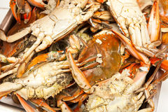 Cooked blue crabs Stock Photo