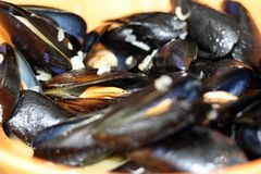 Cooked blue mussels Stock Photography